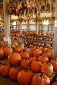 Southern Ohio Pumpkin Patches by Yahoo Farm In Canton Ga Lots Of Fun Things To Do For Younger