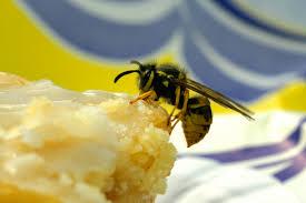 nervige insekten wie sie wespe mücke co loswerden