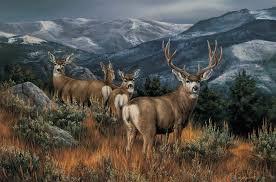 Deer Elk Country High Mountains Wildlife Mule Desktop Backgrounds