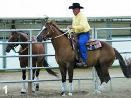 Beat The Barn-Sour Horse Blues - Expert Advice On Horse Care And ... Defeat The Enemy Fly Control Options For Horse And Barn Music Calms Horses Emotional State The 1 Resource Breyer Crazy In At Schneider Saddlery Horsedvm Controlling Populations Around Oftforgotten Bot Equine Dry Lot Shelter Size Recommendations Successful Boarding Your Expert Advice On Horse 407 Best Barns Images Pinterest Dream Barn Barns A Management Necessity Owners Beat Barnsour Blues Care Predator Wasps Farm Boost Flycontrol Strategies Howto English Riders