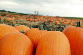 Pumpkin Patch Mobile Al 2015 by Local Farms Offer Pumpkin Patches Mazes And Hayrides Lifestyles