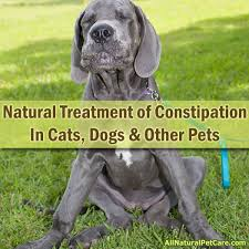 Using Pumpkin For Dog Constipation by Natural Treatment Of Constipation In Cats Dogs And Other Pets