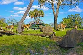 Why We Love Busch Gardens Seren i Safari Experience