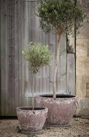 comment planter un olivier en pot ou en pleine terre fiche et