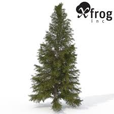 Christmas Tree 6ft Argos by Xfrogplants Eastern Hemlock 2 3d Cgtrader