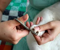 how to cut a cats nails how to trim your cat s claws 4 steps with pictures