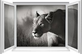 wandtattoo wandbild fenster löwe afrika savanne löwin wohnzimmer deko