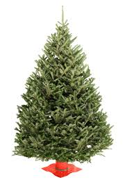 Fraser Fir Christmas Trees by Wholesale Wreaths U0026 Greenery Valfei