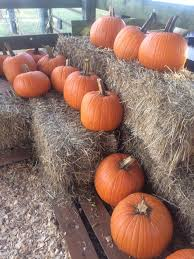 Pumpkin Patch Gainesville Texas by Moore Farms Home Facebook