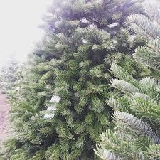 Nordmann Fir Christmas Tree by Heidi U0027s Fresh Christmas Trees 20 Photos Christmas Trees 4220