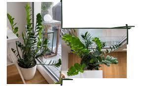 pflanzen für anfänger pflegeleichte grünpflanzen für euer