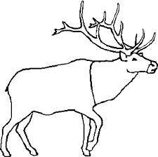 Free Caribou Coloring Page