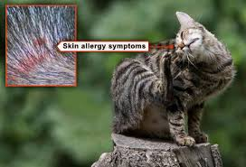 fleas on cats symptoms slideshow what you need to about fleas and ticks cat
