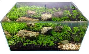 Aquascaping | Aquarium Gardens Blog An Inrmediate Guide To Aquascaping Aquaec Tropical Fish Most Beautiful Aquascapes Undwater Landscapes Youtube 30 Most Amazing Aquascapes And Planted Fish Tank Ever 1 The Beautiful Luxury Aquaria Creating With Earth Water Photo Planted Axolotl Aquascape Tank Caudataorg 20 Of Places On Planet This Is Why You Can Forum Favourites By Very Nice Triangular Appartment Nano Cube Aquascape Nature Aquarium Aquascaping Enrico A Collection Of Kristelvdakker Pearltrees