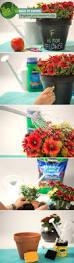Gerbera Corner Pedestal Sink by 71 Best Gardening Projects U0026 Ideas Images On Pinterest Gardening