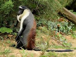 European Zoos For Saving West African Wildlife