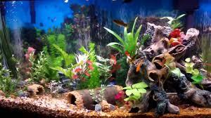 Spongebob Fish Tank Decor Set by Best Fish Tank Aquarium I Ever Created Beautiful Youtube