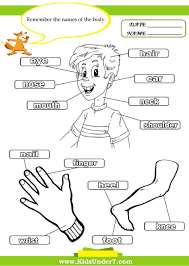Kids Under 7 Parts Of The Body