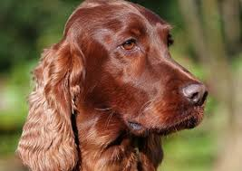 Best House Dogs That Dont Shed by 10 Best Dog Breeds For Families Cesar U0027s Way