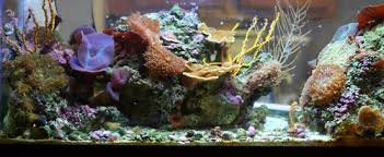 aquarium decorations ratemyfishtank com