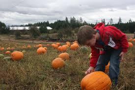 Pumpkin Patch College Station 2014 by Pick A Pumpkin March A Maze The Columbian