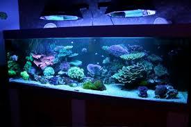 débutant en récifal eau de mer forum aquariophilie aquarium