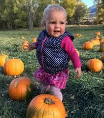 Colorado Springs Pumpkin Patch 2017 by Pumpkin Patch Arkmagazine Net