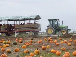 Pumpkin Farms Southern Illinois by 12 Of The Usa U0027s Best Pumpkin Patches To Visit This Fall