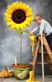 202 Best Sunflowers Best Of The Best Board Images On Pinterest ... Pottery Barn Rug Runners Designs 122 Best Rugs Images On Pinterest Area Rugs Contemporary Sunflower Kitchen Throw Cute Sunflower Kitchen The Pottery Barn Living Room With Glass Table And Lamp Family Articles Chunky Wool Tag Wonderful Jute Vs Sisal Seagrass 202 Sunflowers Of The Board Popular Living Room Design Ideas Decor For Of Weindacom Nuloom Uzbek Matthieu 5 X 8 Ebay 468 Sunflowers Flowers