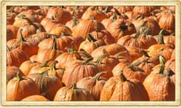 Goebbert Pumpkin Patch In Barrington Il by Goebbert U0027s Pumpkin Patch Farm And Family Center