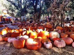 Oak Glen Pumpkin Patch Address by Pumpkin Patches Plan A Day Out Blogpumpkin Patches Archives