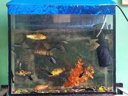 Spongebob Fish Tank Ornaments by No Fishing Aquarium Ornament Uploaded 3 Years Ago Fish Tank