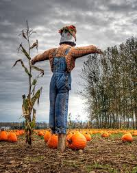 Swan Farms Snohomish Pumpkin Patch by 31 Places For Fall Fun Pumpkin Patches Orchards Corn Mazes And