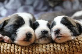 schlaf gut treuer vierbeiner so wichtig ist der schlaf für