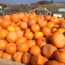 Pumpkin Patch Pittsburgh Pa 2015 by Trax Farms 30 Photos U0026 34 Reviews Fruits U0026 Veggies 528 Trax
