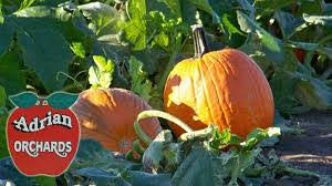 Irvington Halloween Festival Schedule by Halloween Haunts U0026 Fall Festivals Wtts Fm