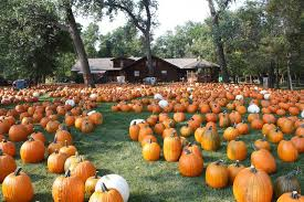 Columbus Ohio Pumpkin Patches by 11 Smashing Good Pumpkin Patches Mnn Mother Nature Network