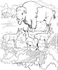 Zoologico Dibujos Para Colorear Dibujos1001com