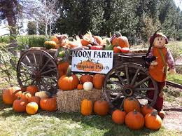 Pumpkin Patch Fort Collins by Moon Farm Pumpkin Patch And Petting Zoo Moon Farm