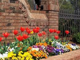 garden design garden design with how to grow tulip bulbs in water