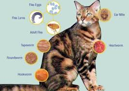 signs of worms in cats kitten intestinal parasites and treatment symptoms of worms in