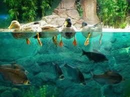 fond d écran aquarium