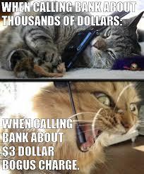 service cats cat memes album on imgur