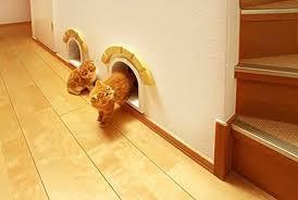 maisons et jeux pour chats