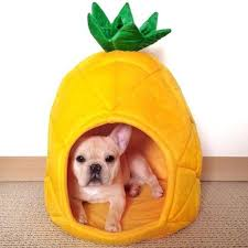 Heart My Frenchie Pineapple Dog Bed 2 Sizes – Heart Frenchies
