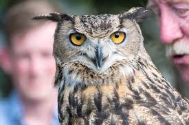 Open Door Bird Sanctuary Now Open Through August Door County Pulse