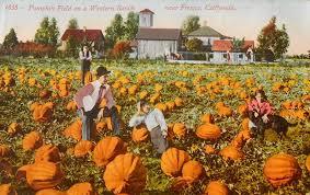 Uesugi Farms Pumpkin Patch by Vintage California Pumpkin Field By Yesterdays Paper On Deviantart