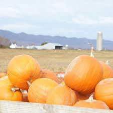 Pumpkin Patch Collins Ms by 100 Pumpkin Patch Farms Mississippi 38 Best Pumpkin Patch