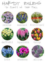 fritillaria hey look there s you you re a hardy bulb to plant