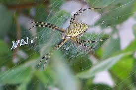 Remains Of The Day Spiders by Have Scientists Learned Anything From Giving Drugs To Spiders Vice